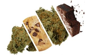 Manufacturing Quality Marijuana Infused Products (MIPs)