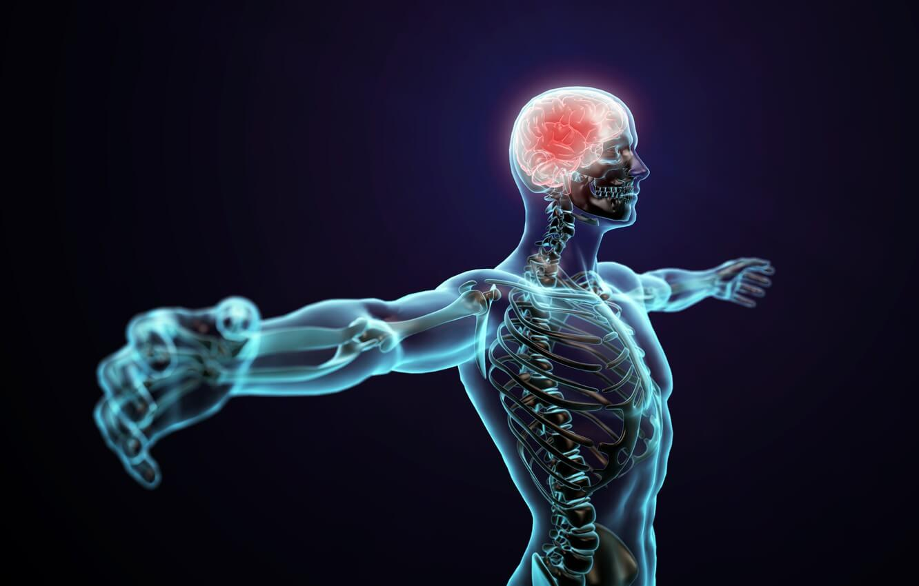 The Endocannabinoid System and our Body